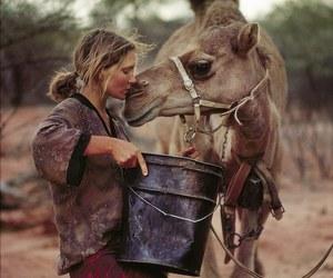 australia, beautiful, and camel image