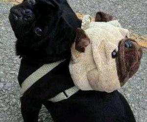 backpack, cachorro, and dog image