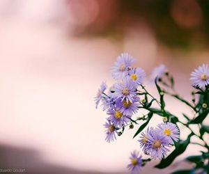 flores, flowers, and indie image