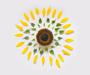 sunflowers and exploding flower image