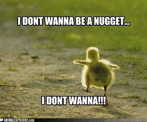 Chicken, funny, and hilarious image