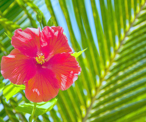 flowers, tropical, and summer image
