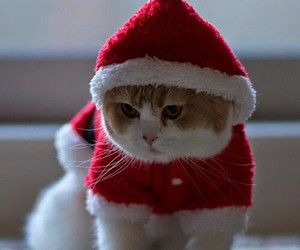 animal, cat, and christmas image