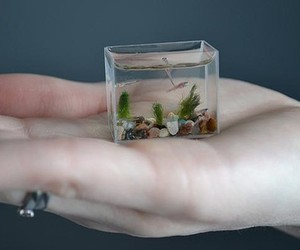 aquarium, fish, and hand image