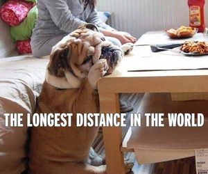 distance and dog image