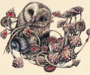 owl and marco mazzoni image