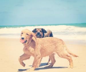 animal, beach, and beautiful image