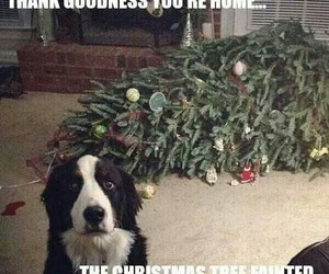 funny, dog, and christmas image