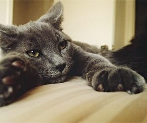animal, animals, and beutiful image