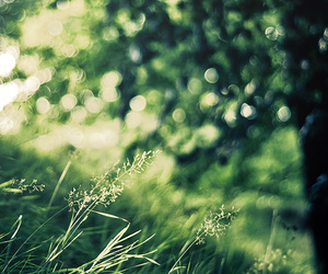 gras and nature image