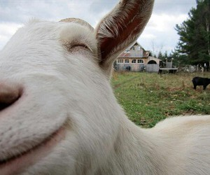 cute, goat, and smile image