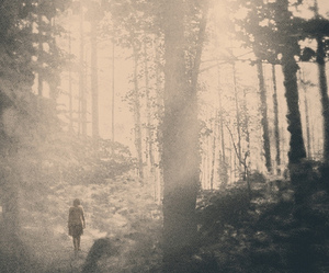 black and white, forest, and vintage image