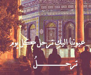 arabic, فلسطين, and القدس image
