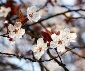 bloom, blossom, and branches image