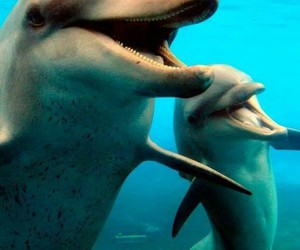 dolphins and cute image
