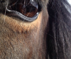 brown eyes, eye, and horse image