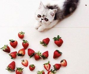 cat and strawberry image