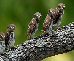 beautiful, owls, and family image