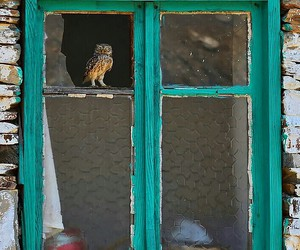 home, owls, and old image