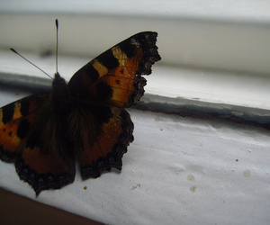 butterfly and summer image