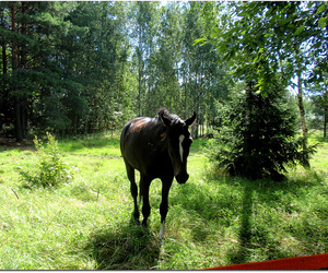 green grass, horse, and summer image