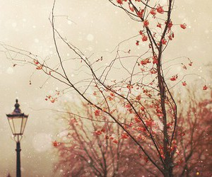 vintage, tree, and nature image