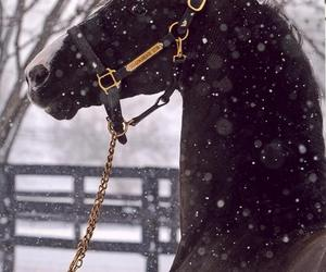 animal, horse, and horses image