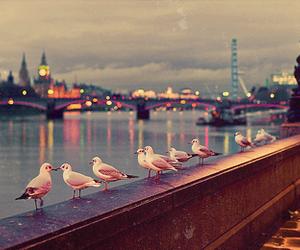 london, Big Ben, and bird image