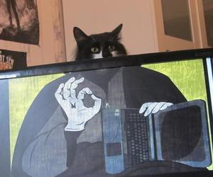cat and lol image