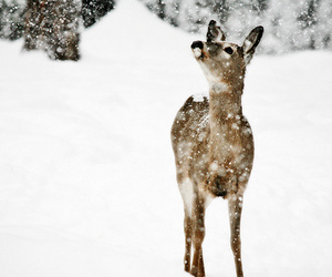 animal, nature, and snow image
