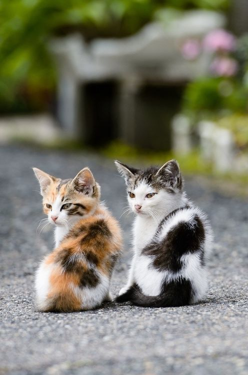 adorable, babies, and cats image
