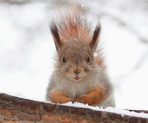 adorable, snow, and squirrel image