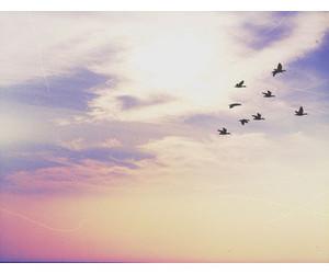 beauty, sky, and free image
