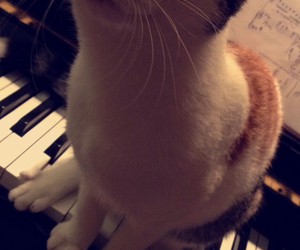 cat, happy, and piano image