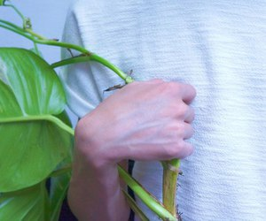 pale, plants, and hand image