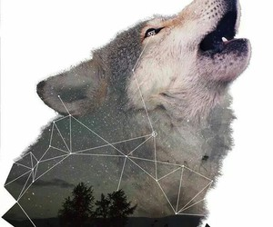 stars and wolf image