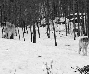 animals, black and white, and landscape image