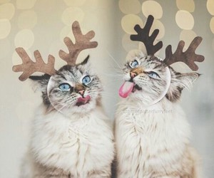 beautiful, funny, and cat's image