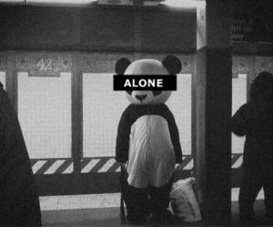 alone, panda, and black and white image