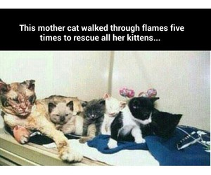 cat, hero, and kittens image