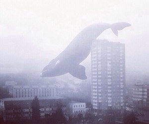 whale, city, and fog image