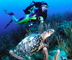 marine life, scuba diving, and snorkeling image