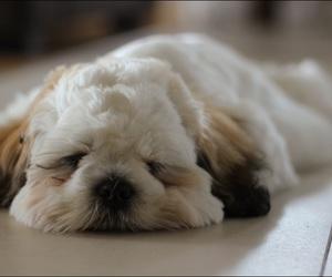 dog, sleep, and photography image