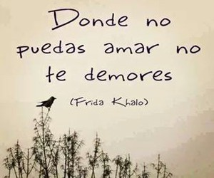 amor, frases, and quote image