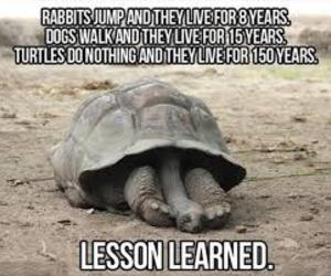 turtle, funny, and lesson image