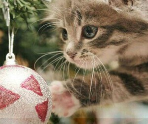 ball, cat, and cute image