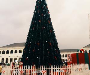all, christmas tree, and giant image