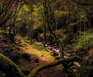 sanctuary, stream, and woods image
