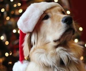 christmas, dog, and golden retriever image