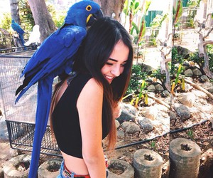 girl, blue, and bird image
